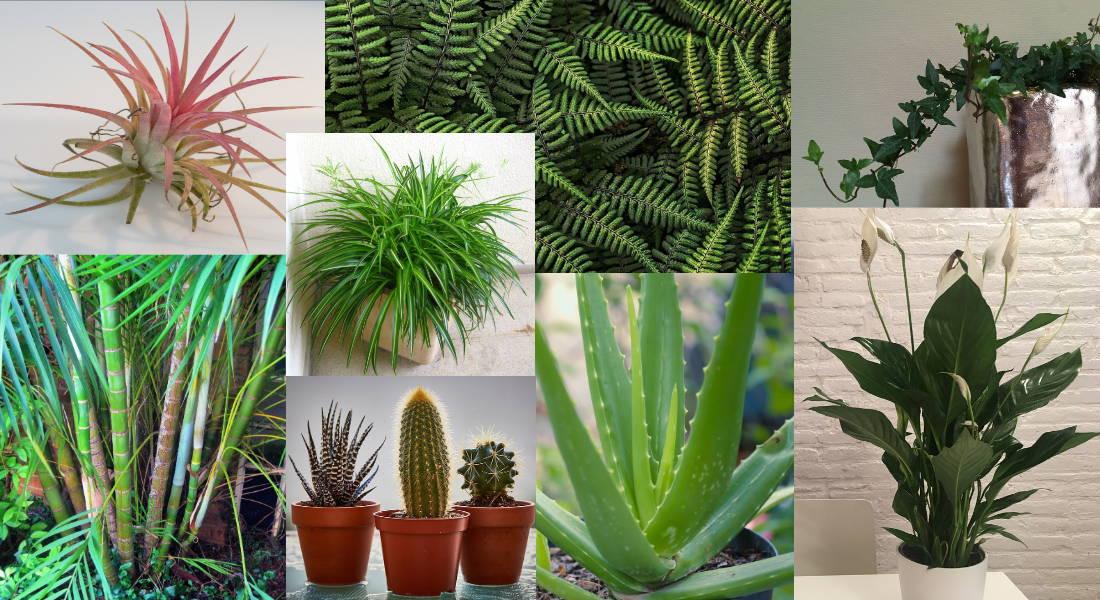 plantas deshumidificadoras